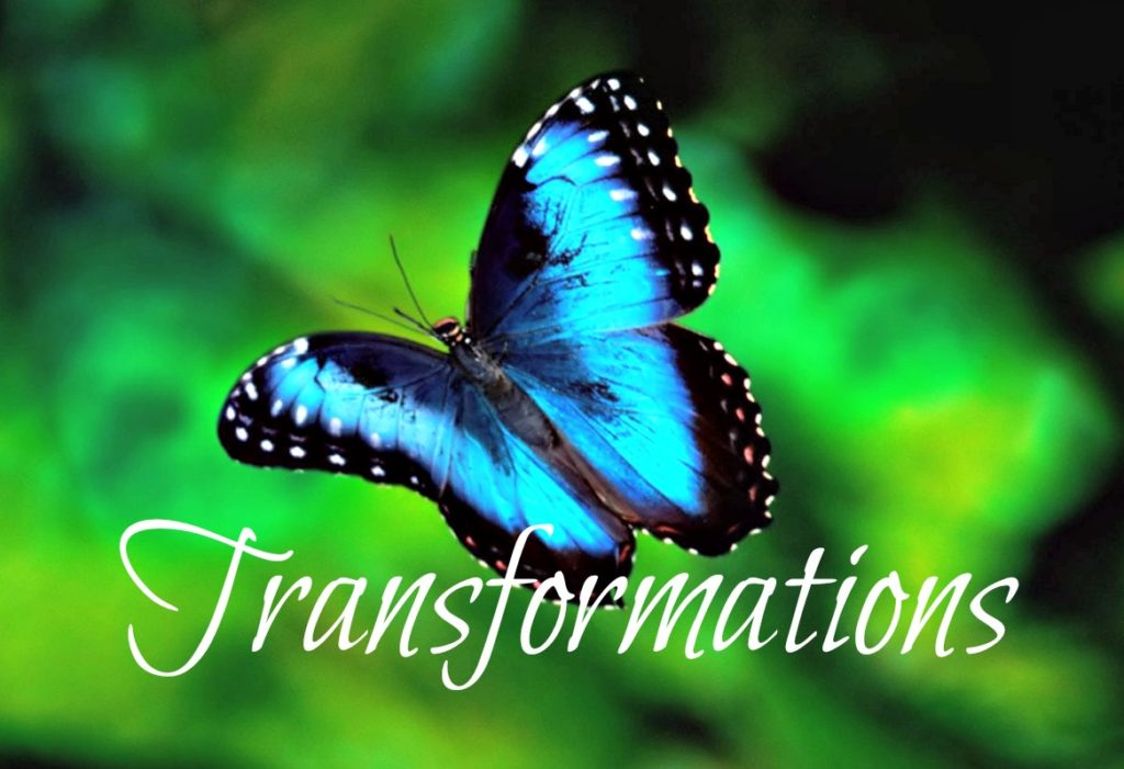 Karner_Blue_Butterfly_transformations